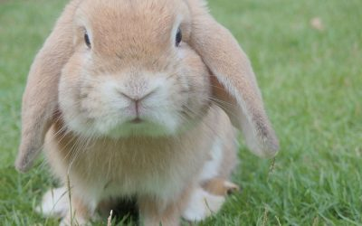 Your Quick Care Guide: Rabbits